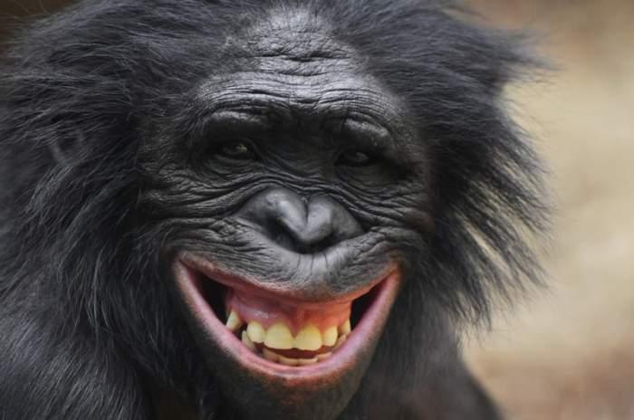Die schlausten Tiere der Welt: 5 Tiere mit besonders viel Köpfchen